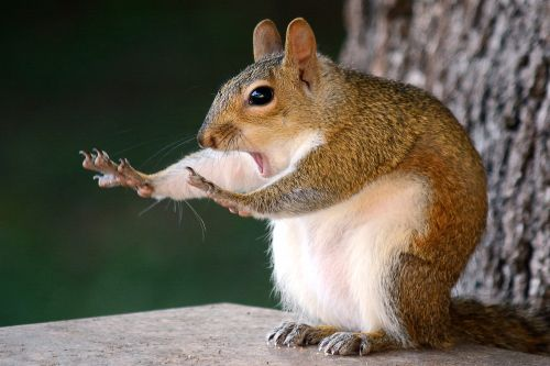 Amusing Finalists From This Year's 'Comedy Wildlife Photography Awards'