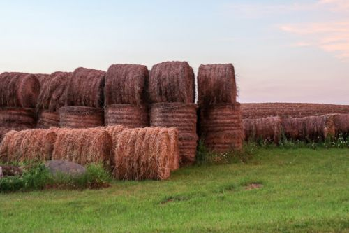 FIELDS OF SPRING HAY BALES
