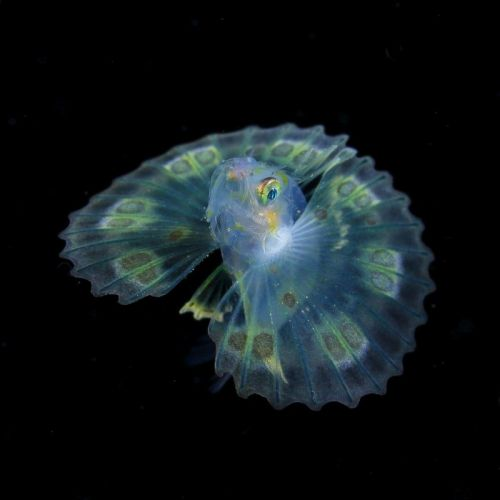 Photos of Tiny Underwater Creatures Glowing Like Jewels of the Sea