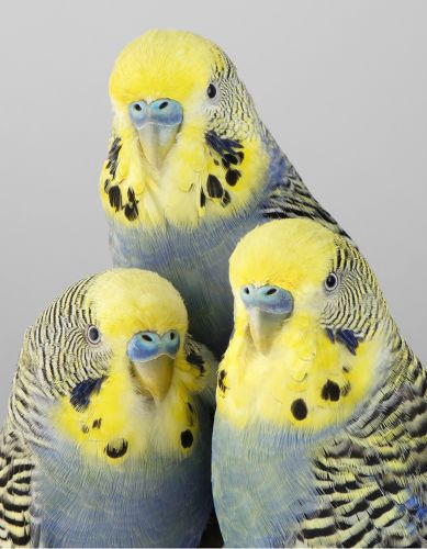 Elegant Portraits Highlight the Feathery Features of Leila Jeffreys' Perfectly Posed Birds