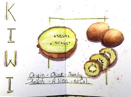 Sketchbook Journal - Kiwi