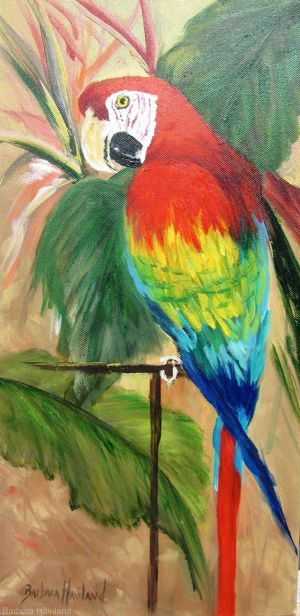 Charlie the Red Macaw parrot,oils,Barbara Haviland