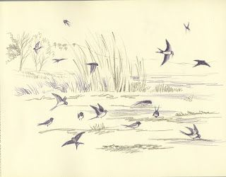 Concetta Flore- Swallows on mudbank