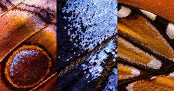 Macro Photos of Butterfly Wings Made by Combining 2,100 Separate Shots