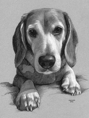 A Puppy Pet Portrait Commission