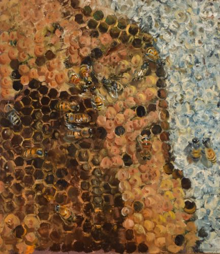 Honeybees, Brood, and Capped Honey