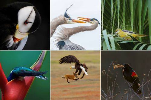 Winners of the 10th Annual Audubon Photography Awards Revealed