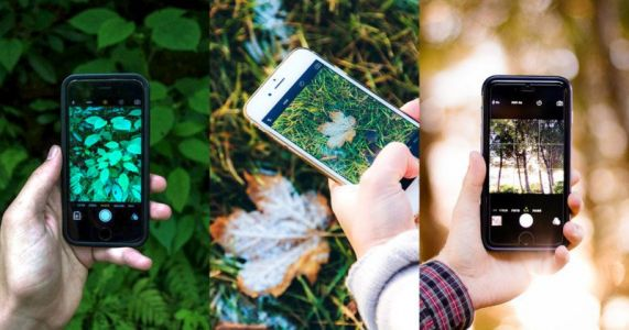 This Free 'Shazam for Nature' App Can Identify Plants and Animals in Photos
