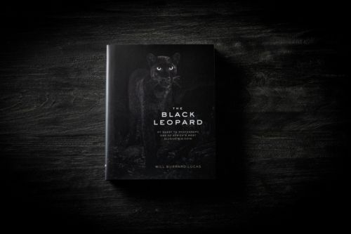 The Black Leopard: One Man's Quest to Capture the Ultimate Wildlife Photo