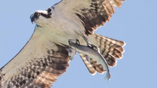 This Photographer Caught a Bird That Caught a Shark That Caught a Fish