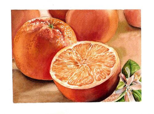 Watercolor Painting Of Orange - Artful Vitamins Series