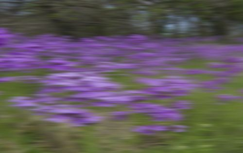 Use 'Roadside Wildflowers at Full Speed' to Identify Plants Without Leaving Your Car