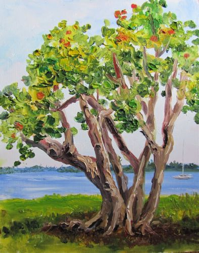 1762 Sea Grape Tree by the river, plein air alla prima