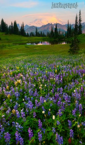 Shooting Wildflowers With Impact - Kevin McNeal