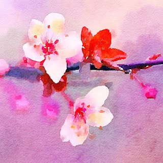 Cherry Blossoms by Basho