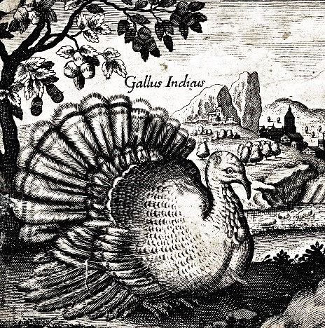 The Pricey Christmas Turkey in 16C-18C England