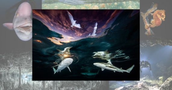 Photo of Reef Sharks Headlines Underwater Photographer of the Year 2021