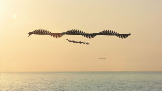Double Helixes Streak Across the Sky in Multi-Shot Images of Birds by Xavi Bou