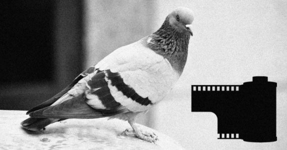 The Photo Editor Who Used a Homing Pigeon to Rush Photos to Press
