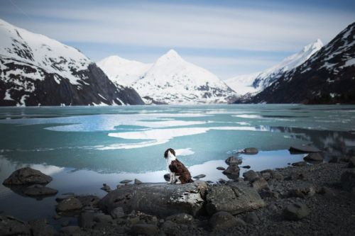 Photos of Dogs in Breathtaking Landscapes