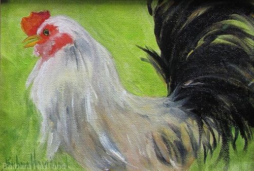 Rooster, 1, oils canvas,fowl, Barbara Haviland