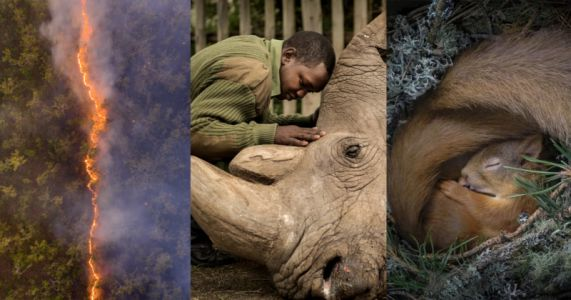 This is the People's Choice for Wildlife Photographer of the Year
