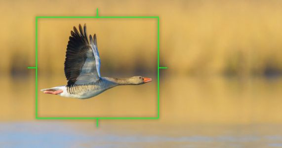 Olympus Adds Bird Detection AF and RAW Video Support to E-M1X