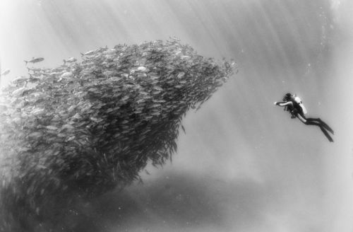 Photos of Divers with Massive Schools of Fish