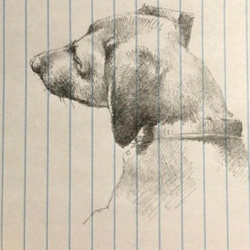 HB pencil on ruled paper • inspiration from sktchyapp • dog
