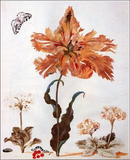 Maria Sibylla Merian. Born on this day in 1647