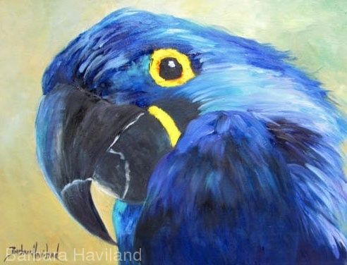 HYacinth Macaw Up Close,oils canvas,Barbara Haviland Wildlife Texas Artist