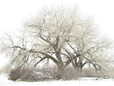 "Winter Landscape, Tree, Snow Scene, Fine Art Photography ""4-13-18"" by Colorado Photographer Kit Hedman, Boarding House Studio Galleries, Denver"