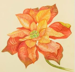 Christmas Rose or Poinsettia