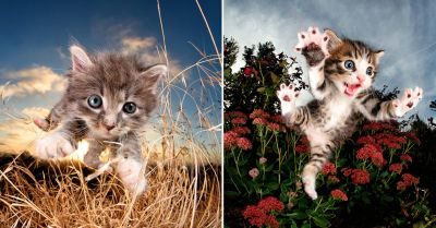 Playful Portraits of Kittens Mid-Pounce