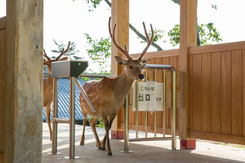 A Photo Series by Yoko Ishii Documents the Free-Ranging Urban Deer of Nara, Japan