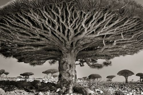 Crossconnectmag: Ancient Trees: Beth Moon Spends 14 Years