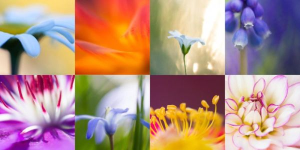 6 Reasons Why You Should Be a Macro Photographer