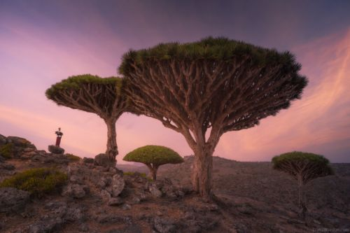 Gorgeous Photos of Socotra, The 'Most Alien-Looking Place on Earth'
