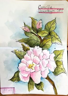 Sketchbook Journal - Pink Camellia