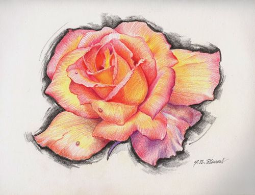 A Rose Drawing