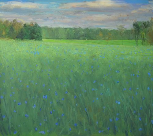 Field of Chicory, Luck's Farm