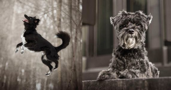 Gorgeous Photo Series Features Often Ignored Dark-Colored Pets