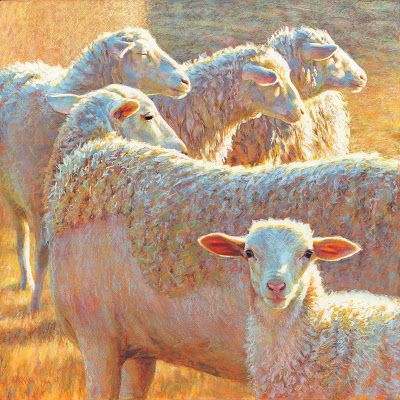 Recent Sheep Won Honorable Mention