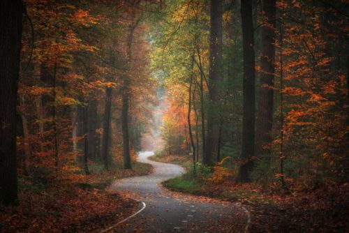 Photos of Golden Autumn in the Netherlands