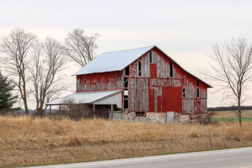 BARNS AND BIRCH TREES