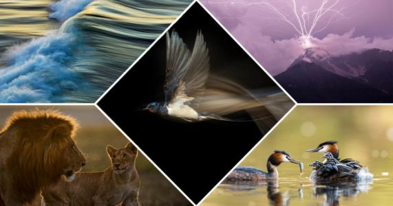 The Winners of the GDT Nature Photographer of the Year 2021