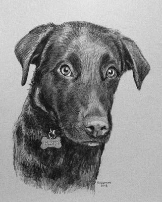 Buster - a Pencil Pet Portrait Commission
