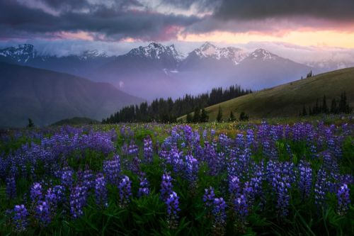 From The Archives - Photographing Wildflowers for Impact.-Kevin McNeal