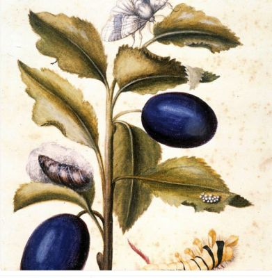 Born today:Maria Sibylla Merian, Max Ernst and National Poetry Month
