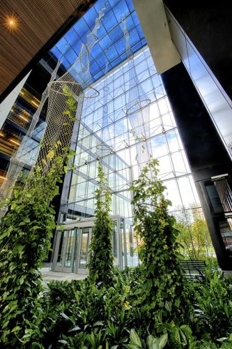Creating Vertical Gardens and Green Facades with Steel Cables